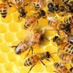 Producători apicoli: România are o mare problemă în desfacerea și vânzarea mierii pe piața autohtonă