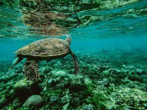 Oceanele sunt, aproape in totalitate, afectate de activitatea umana