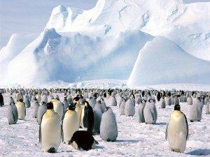 Există un plan nebunesc de a aduce un aisberg din Antarctica pentru a rezolva criza de apă din Cape Town