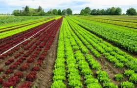 România este în top 10 țări est-europene cu terenuri agricole ecologice, suprafețele sunt în declin