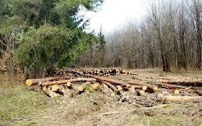 INS: În 2016 a scăzut volumul de lemn exploatat