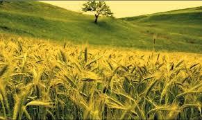 România a redevenit grânarul Europei: exporturile românești de cereale sunt cele mai mari din UE