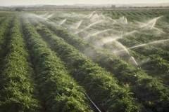Irigațiile și legumicultura din România, oportunități pentru investitorii din Emiratele Arabe Unite