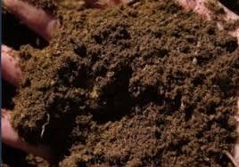 Constanţa: Îngrășământ organic, inventat de un profesor și două foste eleve, brevetat