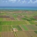 Ministrul Agriculturii dorește limitarea proprietăţii persoanelor fizice la 100 de hectare din 2014