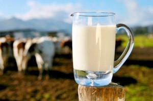 Producția internă de lapte a crescut cu 4,7%, iar cea importată s-a mărit cu 7% în primul semestru