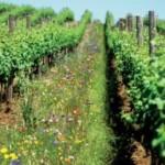 Agricultura Organica, solutie la problemele incalzirii globale si insecuritatii alimentare – studiu Rodale Institute