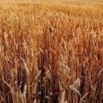 ORZUL cu Grafice Interactive: productia de orz in Europa reflecta atat conditiile climaterice cat si consumul de bere