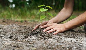Fonduri nerambursabile pentru împădurire