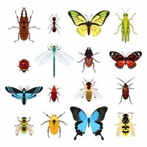 """Avertizare asupra """"Armaghedonului ecologic"""" după o scădere dramatică a numărului de insecte"""