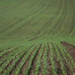 INS: România are cele mai multe exploataţii agricole din UE, dar suprafaţă utilizată este în scădere