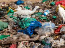 Parlamentul European decide să interzică articolele de unică folosință din PLASTIC până în 2021