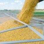 Producţia de cereale pentru boabe a crescut cu 3,4% în 2014