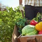 De la convențional la bio: Cum se face conversia unei ferme la agricultura ecologică