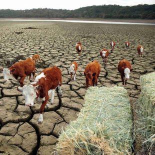CARNEA pe care o vom mânca în anul 2040 nu va mai proveni predominant de la animale