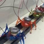 După modelul Furnicilor, echipe de Microroboți pot muta mașini de 2 tone