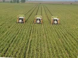 Fermierii pot solicita până la 80% din valoarea subvențiilor APIA, la agențiile BCR
