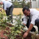 Etiopia plantează peste 200 de milioane de copaci într-o singură zi – parte dintr-un efort total anual de 4 miliarde copaci