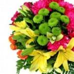 Vanzarile Floria.ro au crescut cu 60%, la peste jumatate de milion de euro
