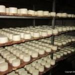 FrieslandCampina, proprietara fabricii de lactate Napolact, are în plan închiderea unităţii din Cluj şi mutarea producţiei la Târgu-Mureş