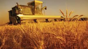 Sistemul de taxare inversă pentru cereale rămâne până în 2018