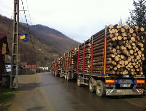 Industria Mobilei vs Romsilva – doar 5% din lemnul scos la licitatie a fost vandut