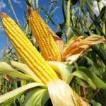 Preturile produselor alimentare au scazut la nivel mondial, trei luni consecutiv
