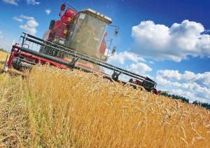 Producţia de cereale a fost ajustată la 19,1 mil. tone, creștere pozitivă de 10%