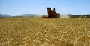 Producția agricolă 2016 – efectul asupra PIB = ZERO, ponderea în PIB s-a dus sub 4%