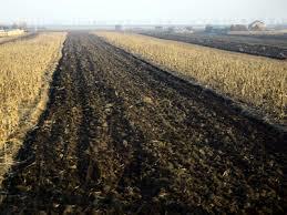 teren arabil