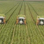 Eurostat: Producţia agricolă a României a fost de 15,5 mld. euro în 2014