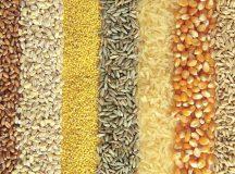 Ucraina este pe primul loc în lume la exportul de cereale cu 50 milioane tone din 70 mil. tone produse